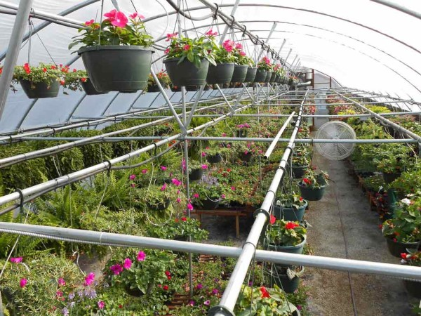 Reids-Orchard-flowers-greenhouse