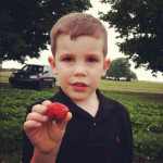 Reids Orchard U Pick Strawberries