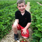 fresh U-Pick Strawberries from Reid's Orchard