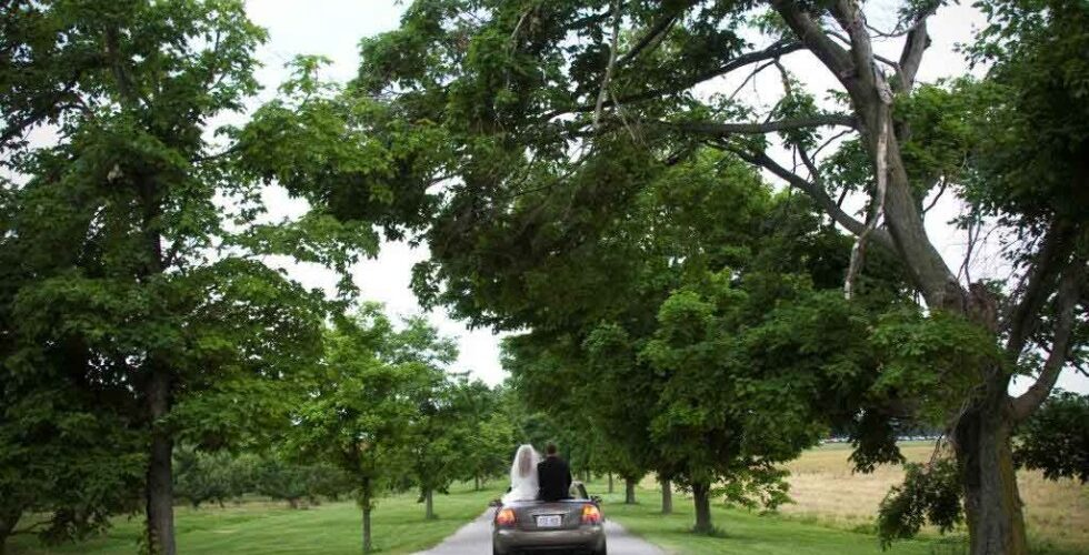 reids-orchard-wedding-outdoors-driveway
